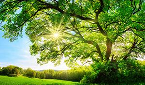 「緑」が与える印象や心理効果