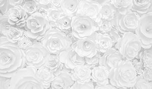 「白」が与える印象や心理効果